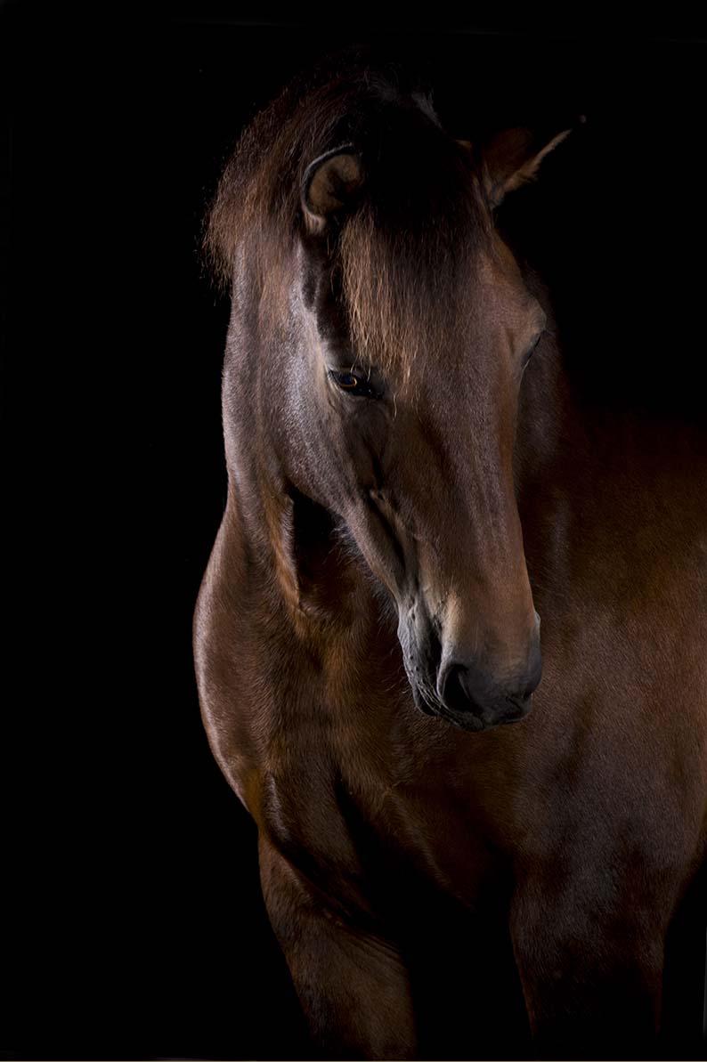 pferdefotografie-hannover-102
