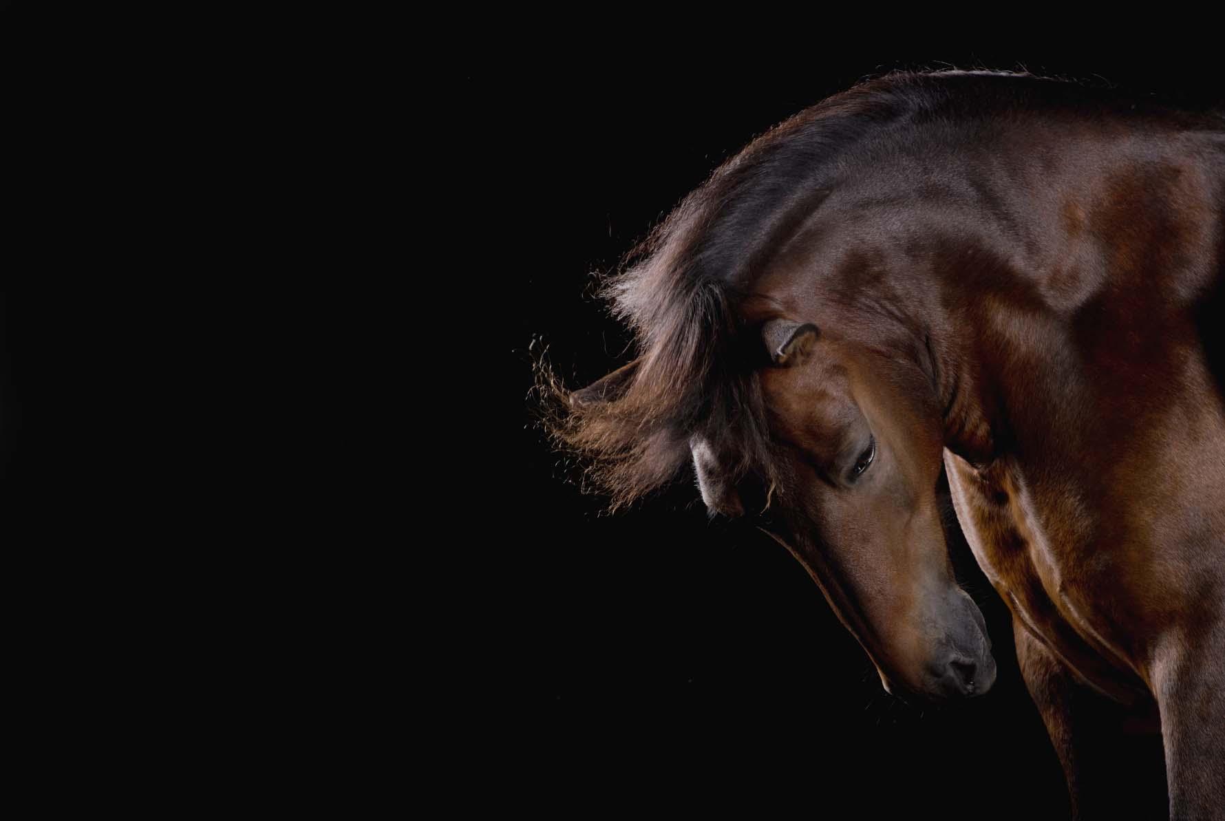 pferdefotografie-hannover-103