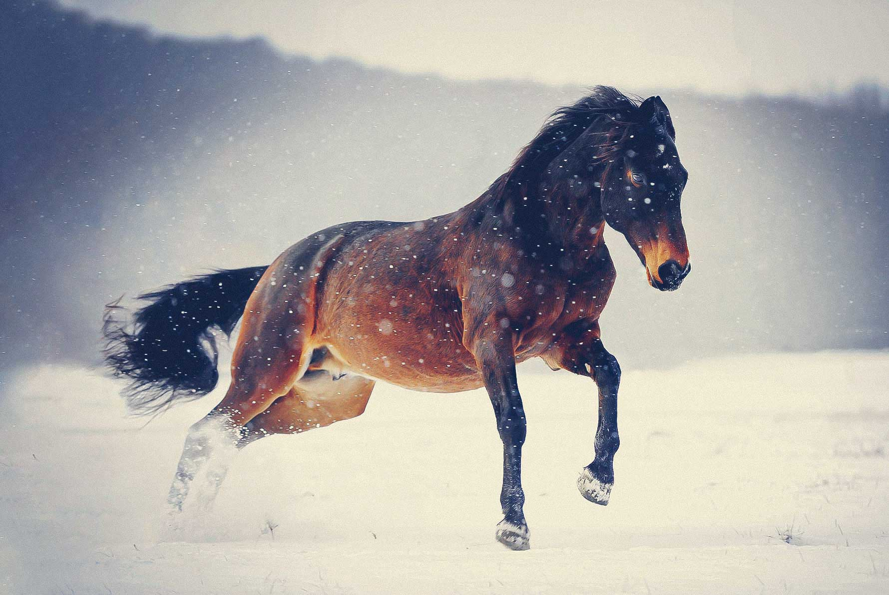 Pferdefotografie_Siegen002-2