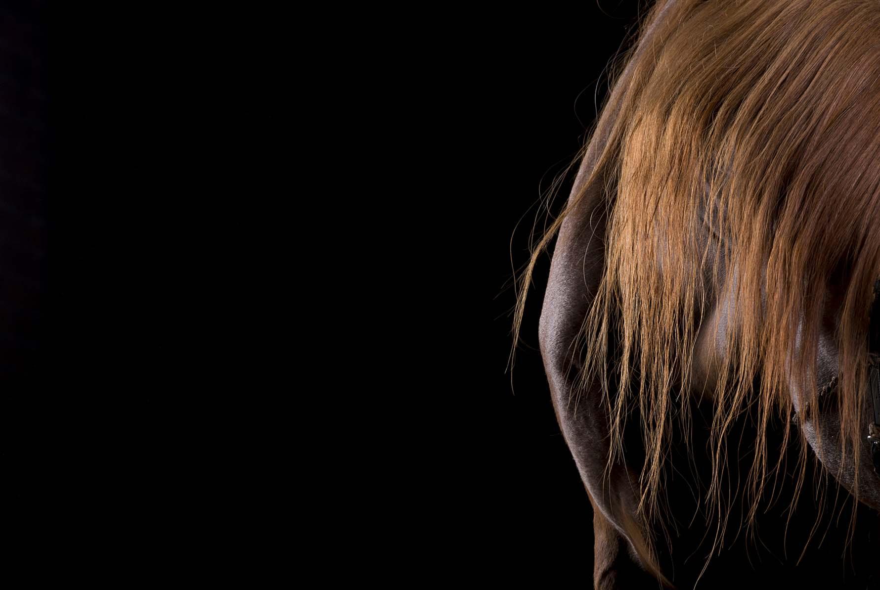 pferdefotografie-hannover-105.jpg
