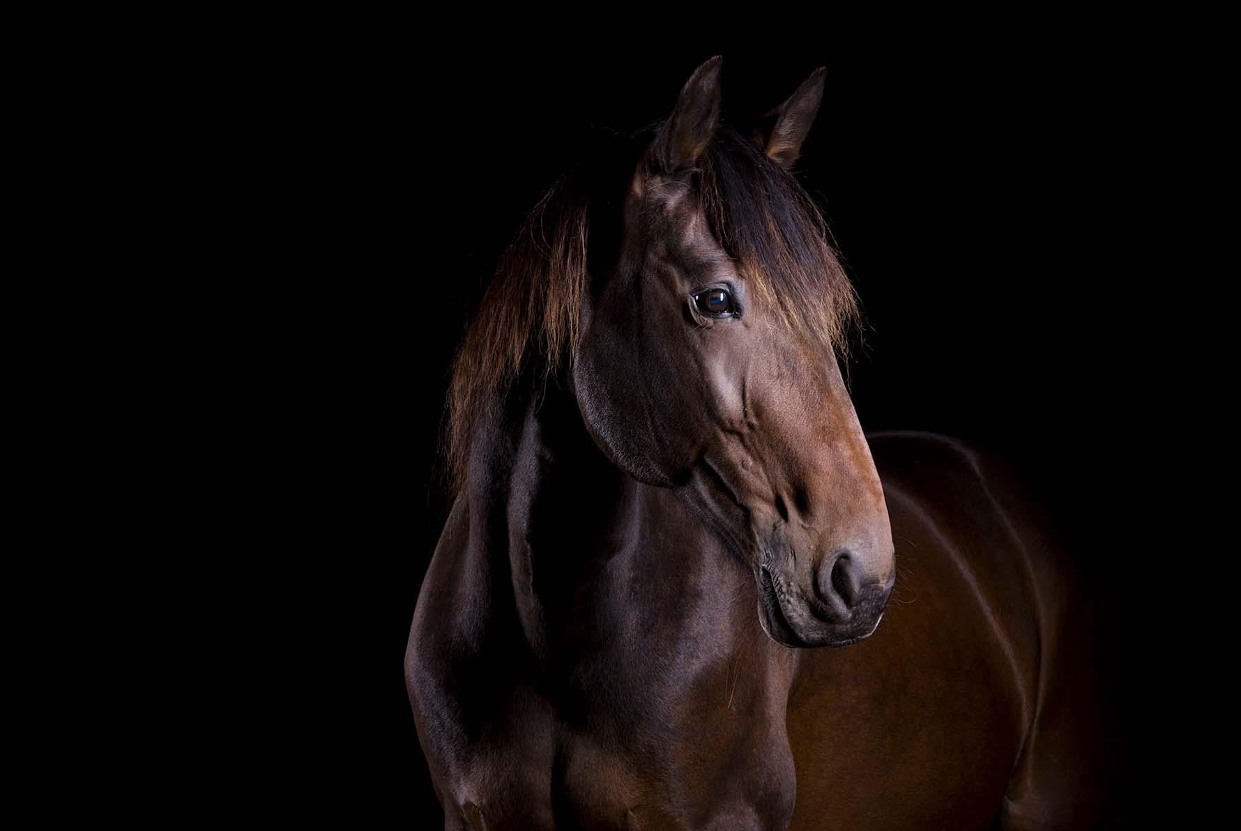 pferdefotografie-siegerland-033.jpg