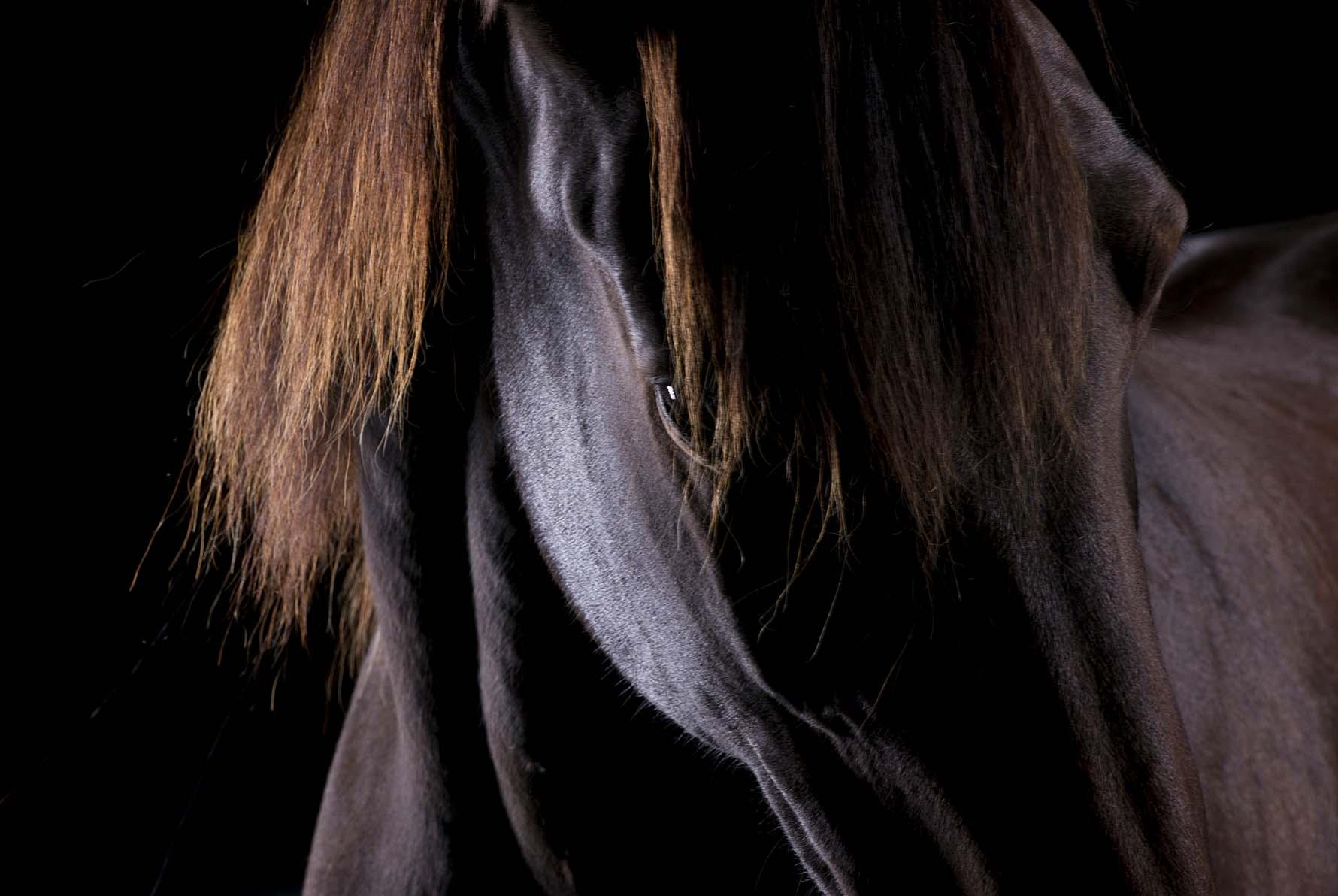 pferdefotografie-siegerland-034.jpg