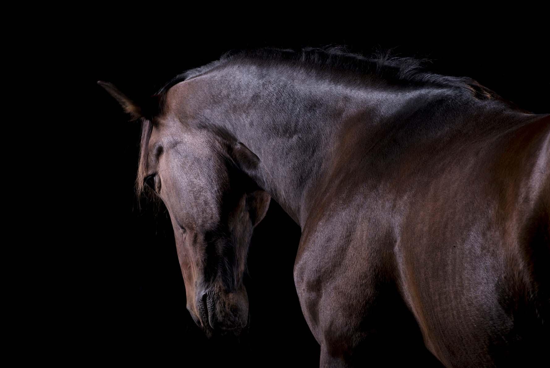 pferdefotografie-siegerland-038.jpg