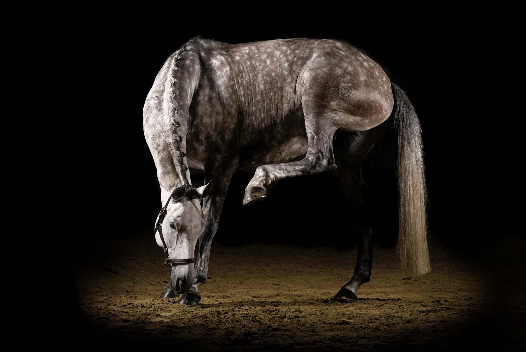 pferdefotografie-siegerland-045.JPG